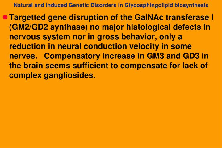 Targetted gene disruption of the GalNAc transferase I (GM2/GD2 synthase) no major histological defects in nervous system nor in gross behavior, only a reduction in neural conduction velocity in some nerves.   Compensatory increase in GM3 and GD3 in the brain seems sufficient to compensate for lack of complex gangliosides.