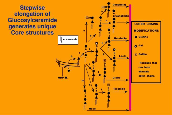 Stepwise elongation of Glucosylceramidegenerates unique Core structures