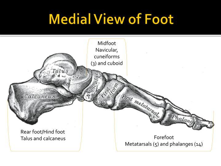 Medial view of foot