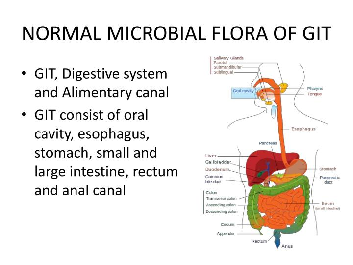 Normal flora and anal culture