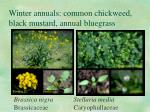 winter annuals common chickweed black mustard annual bluegrass