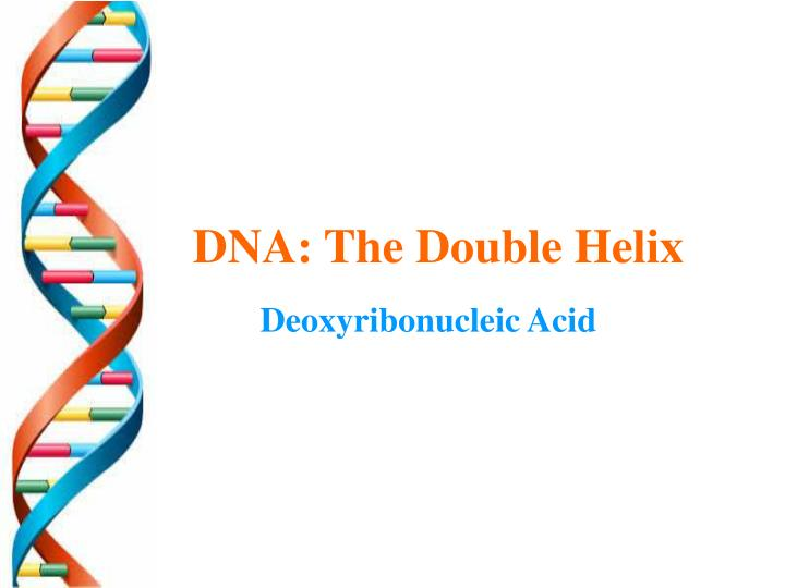dna the double helix n.