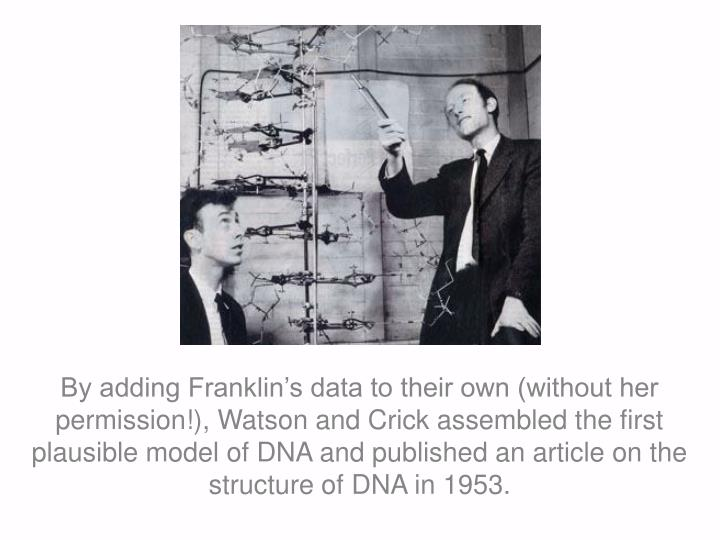 By adding Franklin's data to their own (without her permission!), Watson and Crick assembled the first plausible model of DNA and published an article on the structure of DNA in 1953.
