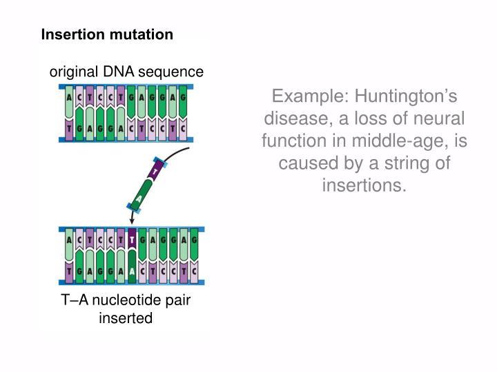 Insertion mutation