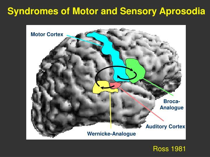 Syndromes of Motor and Sensory Aprosodia
