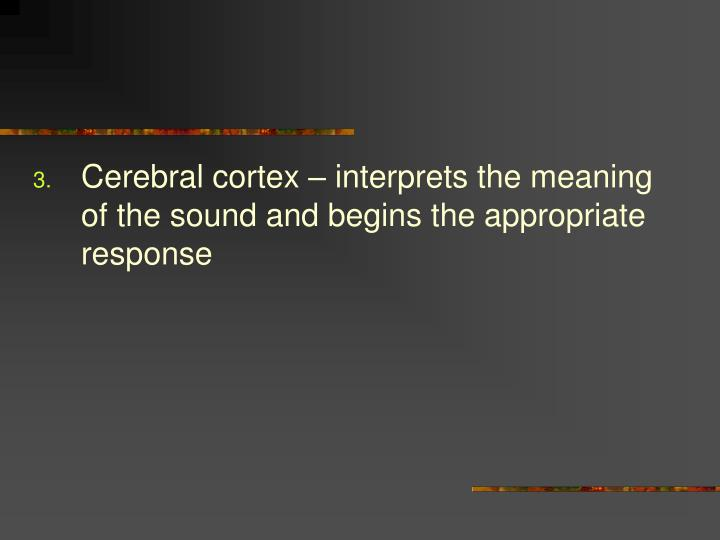 Cerebral cortex – interprets the meaning of the sound and begins the appropriate response