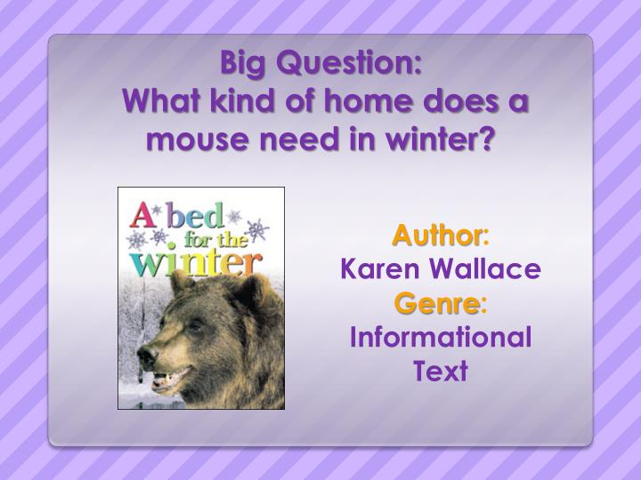 big question what kind of home does a mouse need in winter n.