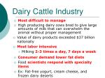 dairy cattle industry