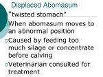 displaced abomasum
