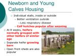 newborn and young calves housing