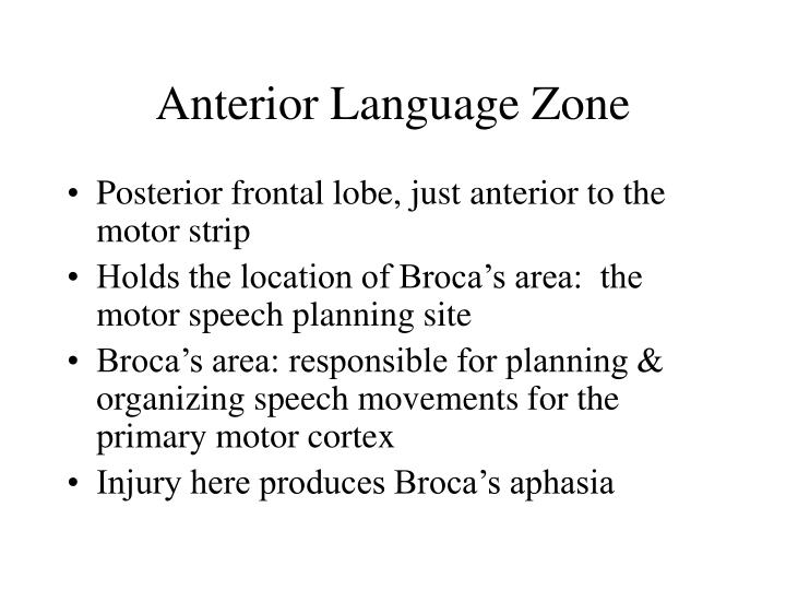 Anterior Language Zone