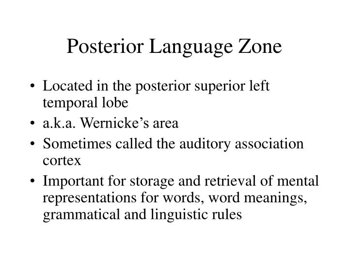 Posterior Language Zone