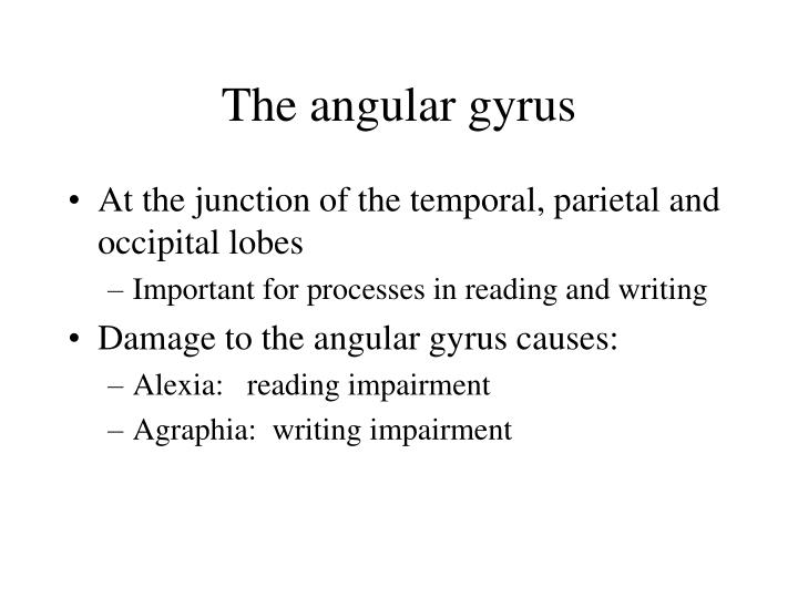 The angular gyrus