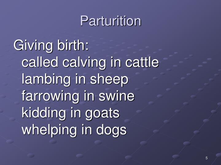 causes of parturition in cattle Understanding the causes of stress already outlined should be considered when handling the cattle and planning vaccinations the protocol for the use of a vaccine is on the label of the product and should be followed exactly.