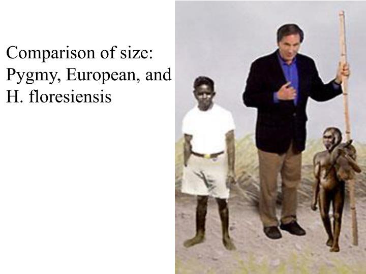 Comparison of size: