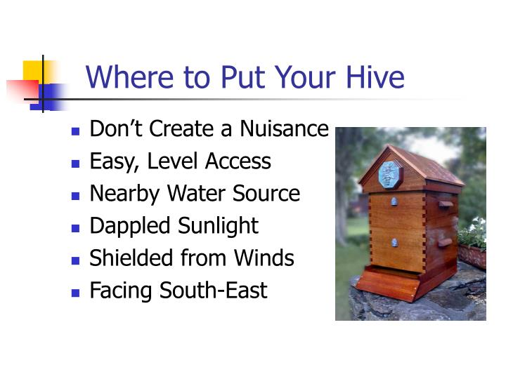 Where to Put Your Hive