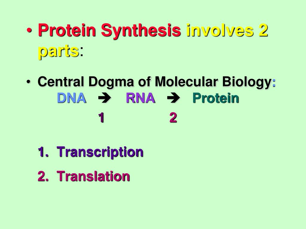 PPT - DNA De-coded: PROTEIN SYNTHESIS PowerPoint ...