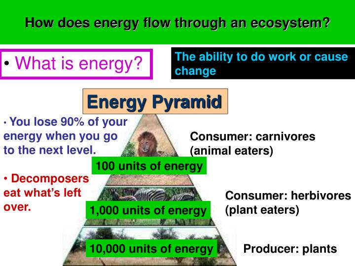 ppt - ecosystems powerpoint presentation