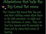 adaptations that help the big eared bat move