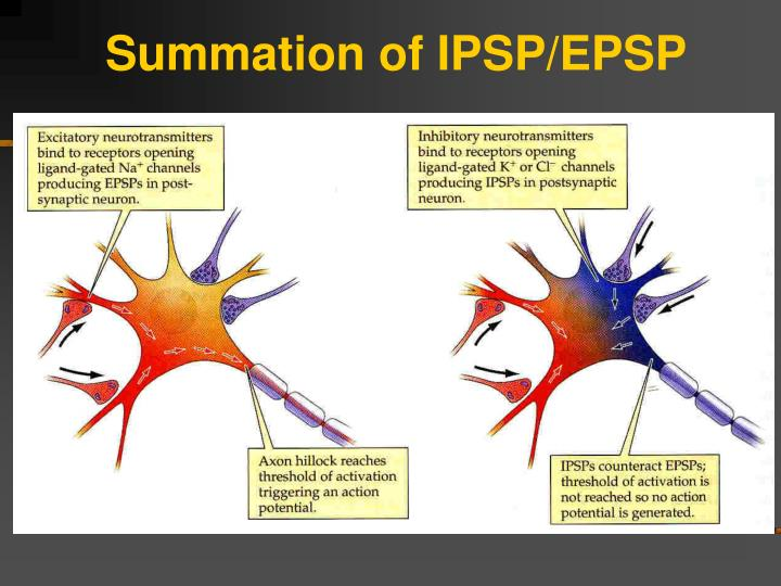 Summation of IPSP/EPSP