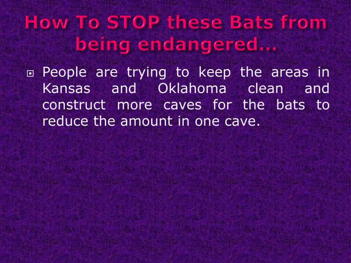 How To STOP these Bats from being endangered…