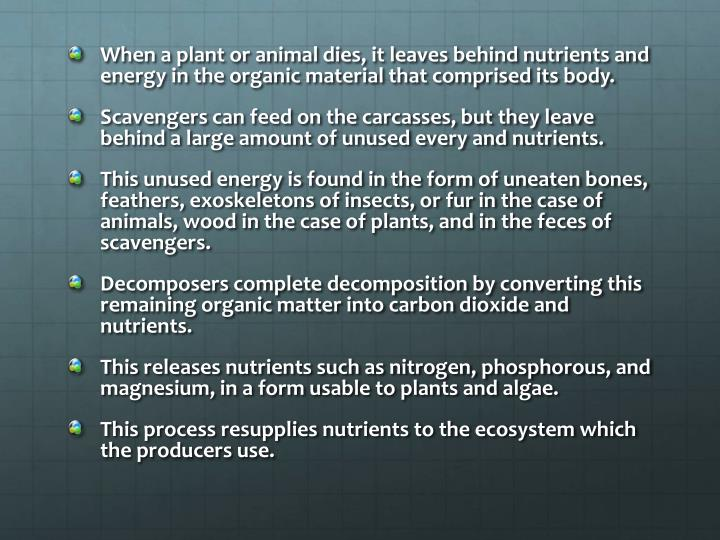 When a plant or animal dies, it leaves behind nutrients and energy in the organic material that comprised its body.