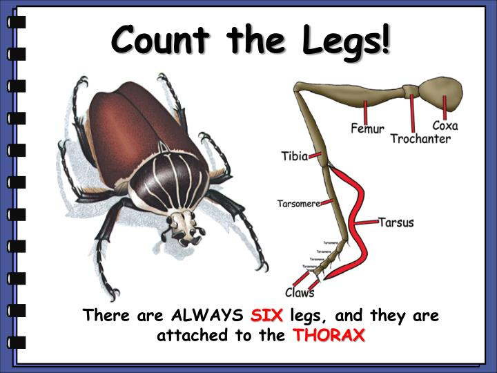 Count the Legs!