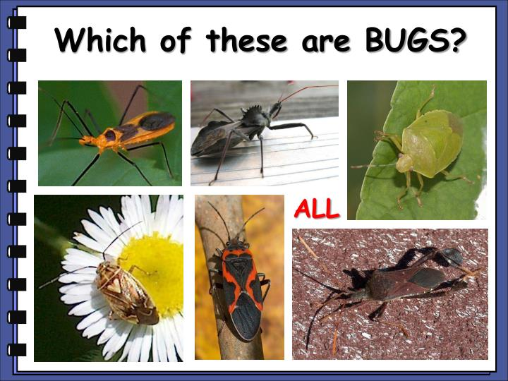 Which of these are BUGS?