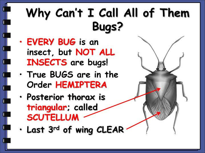Why Can't I Call All of Them Bugs?