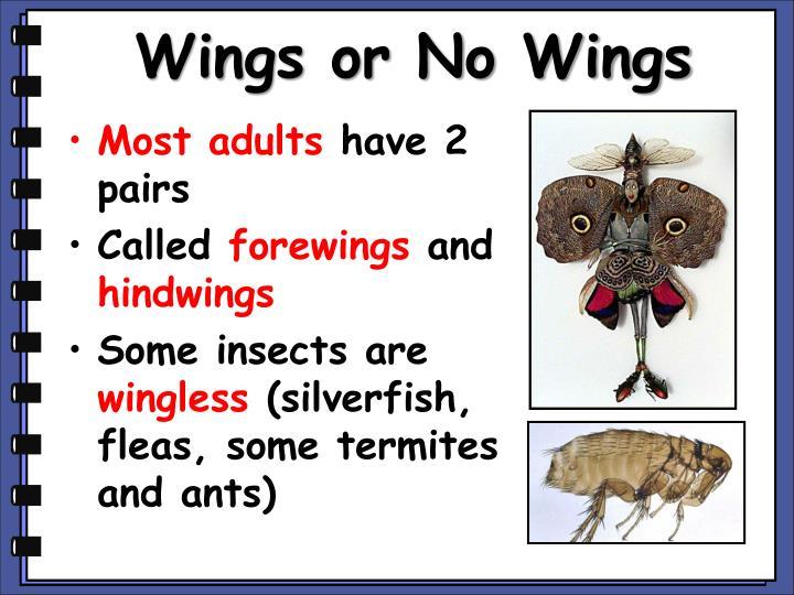 Wings or No Wings