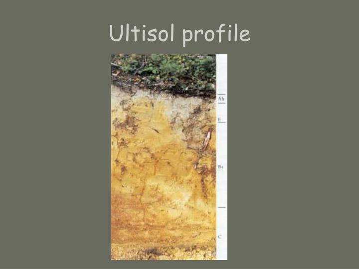 Ultisol profile