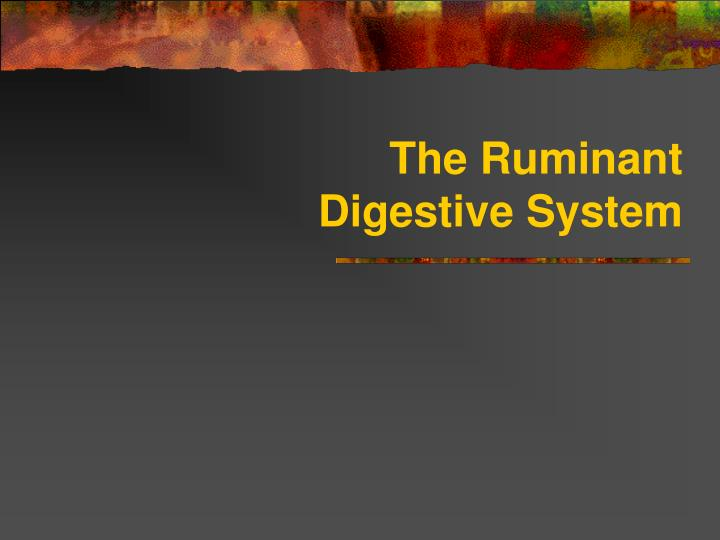 the ruminant digestive system n.