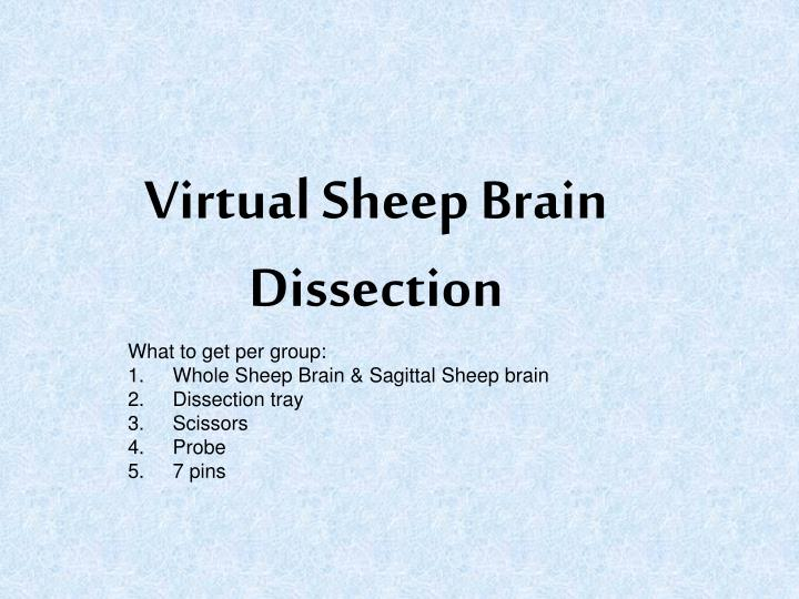 Virtual sheep brain dissection