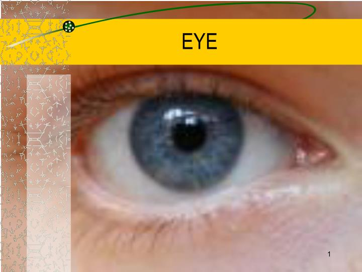 Ppt Eye Powerpoint Presentation Id6683944