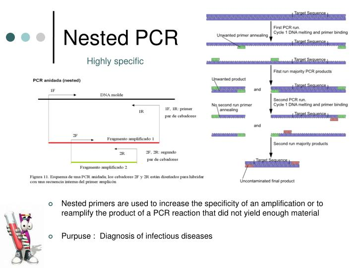 PPT - PCR Polymerase Chain Reaction PowerPoint Presentation - ID:6685739