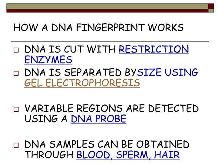 HOW A DNA FINGERPRINT WORKS