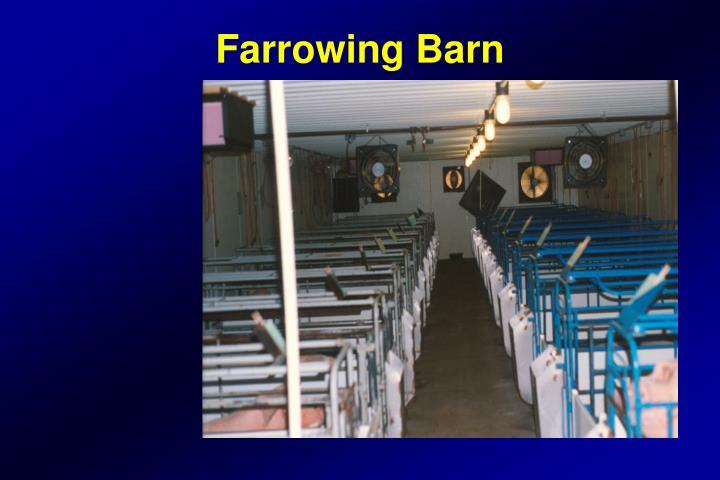 Farrowing Barn