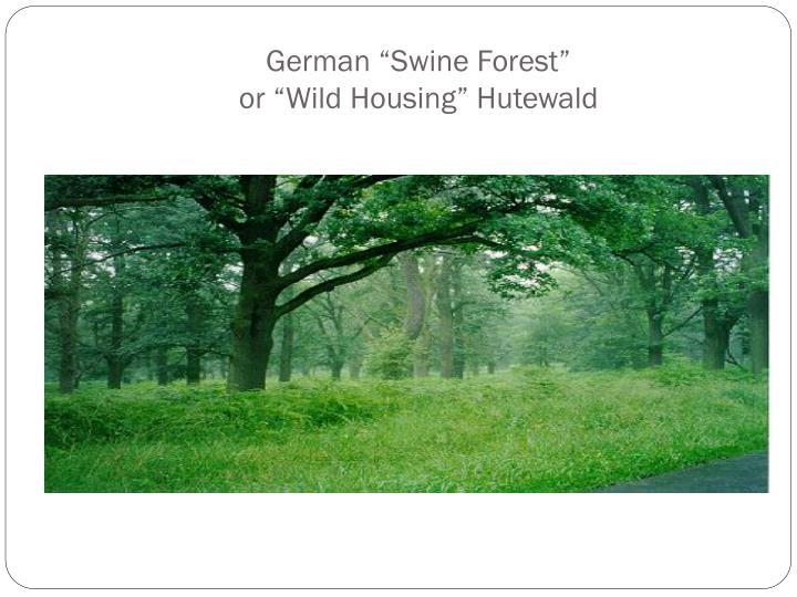 "German ""Swine Forest"""