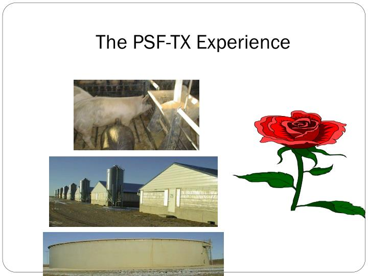 The PSF-TX Experience