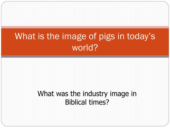 What is the image of pigs in today's world?