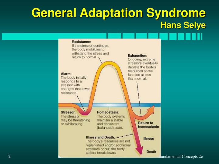 General adaptation syndrome hans selye