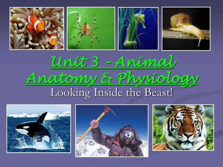 PPT - Unit 3 – Animal Anatomy & Physiology PowerPoint ...