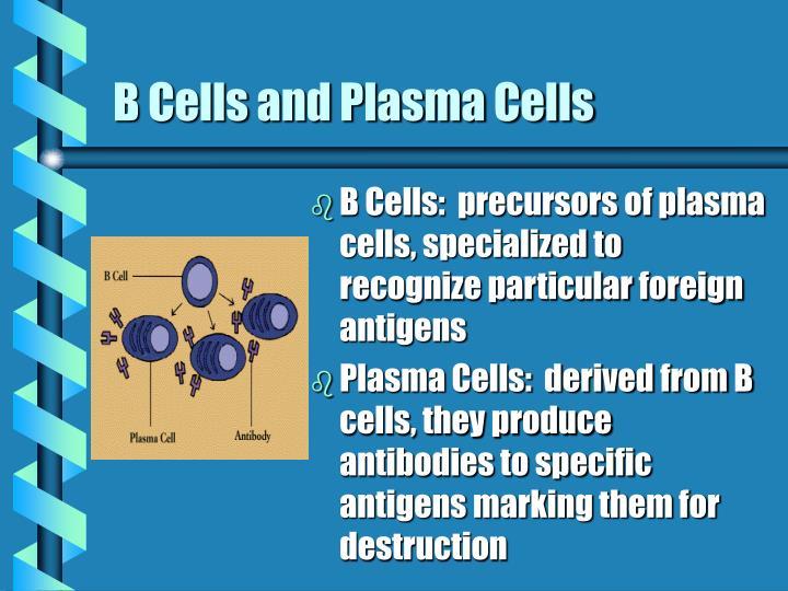 B Cells and Plasma Cells