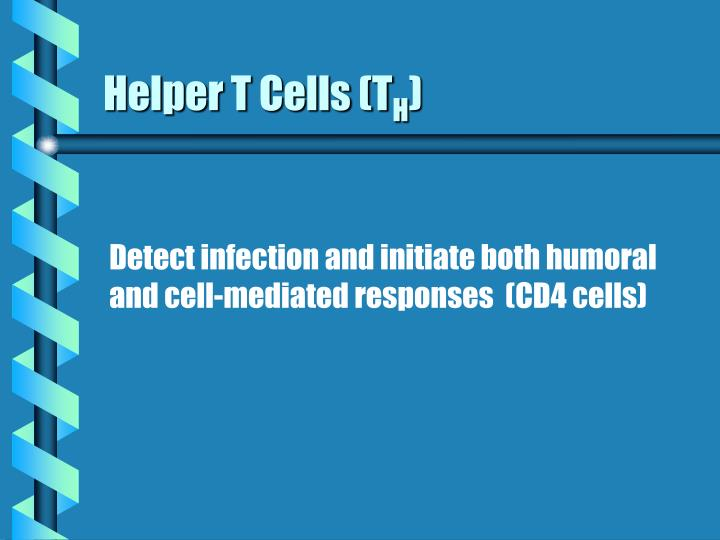Helper T Cells (T