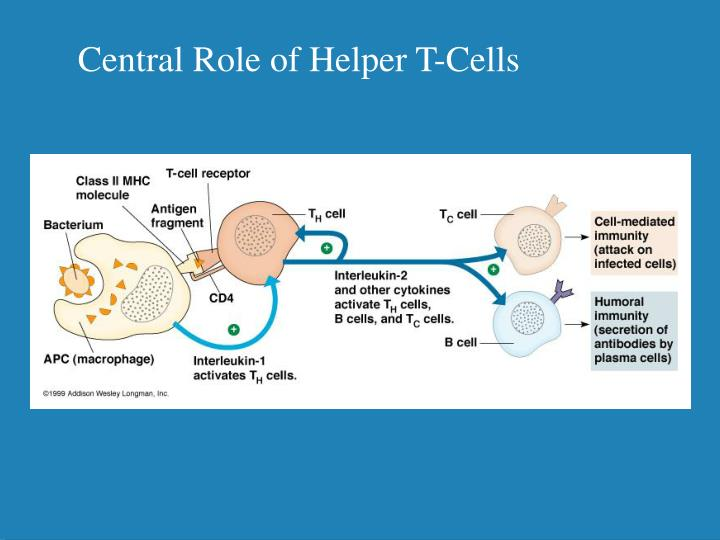 Central Role of Helper T-Cells