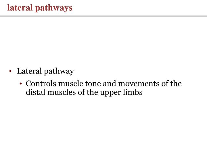 lateral pathways