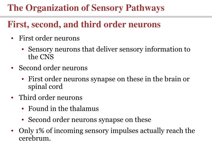 The Organization of Sensory Pathways