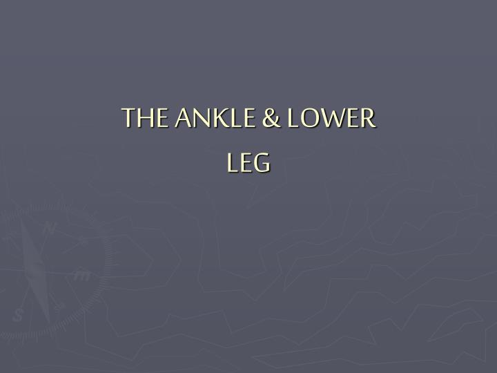 the ankle lower leg n.
