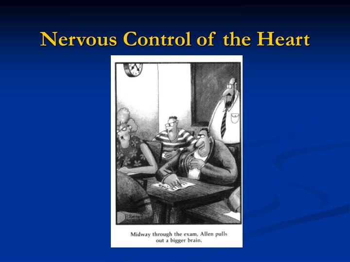 nervous control of the heart n.