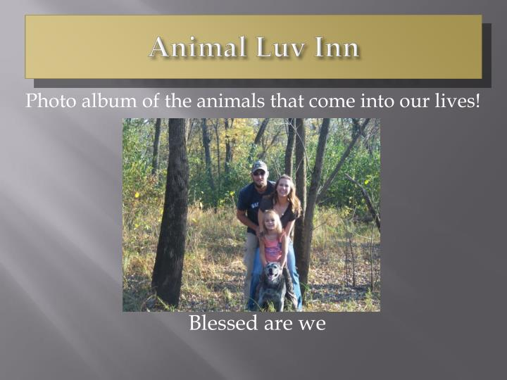 animal luv inn n.